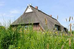 Ein neugebautes Fachwerkhaus mit Reetdach steht hinter dem Obergeorgswerder Hauptdeich; blühendes Wildkraut und Gras auf der Deichkrone.