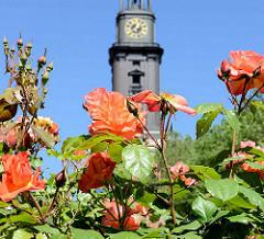 Sommer in Hamburg - blühende Rosen auf der Michelwiese; im Hintergrund die Hamburger Hauptkirche St. Michaelis.