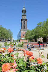 Sommer in Hamburg - blühende Rosen auf der Michelwiese vor dem Brunnen; im Hintergrund die Hamburger Hauptkirche St. Michaelis.