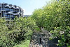 Fussweg mit Bäumen am Kapstadtring in der Hamburger City Nord.