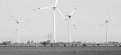 Marschlandschaft bei Wilster - Kühe auf der Weide, Windkraftanlage.