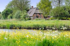 Lauf der Wilsterau bei Wilster - Reetdachhaus / reetgedecktes Bauernhaus; blühende Butterblumen, Löwenzahn.