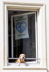 Protestplakat gegen den G20 Gipfel im Fenster im Schanzenviertel - PLANET EARTH FIRST; Greenpeace - ein Hund schaut zu.