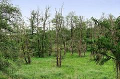 Bruchwald mit kahlen Bäumen in der Seeveniederung