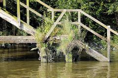 Wassertreppe aus Holz - Prager Ufer im Moldauhafen, Hamburg; das Ständerwerk der alten Holztreppe ist mit Gras und Wildkraut bewachsen.