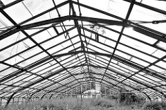 Dach eines Treibhauses / Glashaus in Hamburg Neuengamme - Wildkraut am Boden.