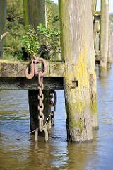 Holzdalben / Anlegepfähle aus Holz - Wildkraut wächst aus vermodertem Holz, eine Eisenketten hängt ins Hafenwasser; Prager Ufer im Moldauhafen, Hafenbecken im Hamburger Hafen.