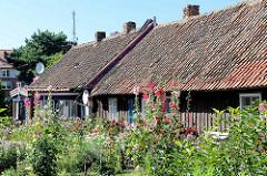 Blühende Blumen / Stockrosen, Fischerhütten in Nida / Nidden in Litauen.