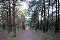 Kiefernwald / Wanderweg bei Nida, Kurische Nehrung - Litauen.