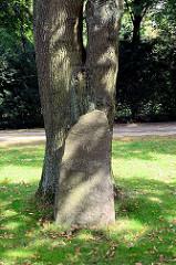 Gedenkstein Up ewig ungedeelt 1848-1858 mit Eichenlaub - heute Wahlspruch von Schleswig-Holstein. Eichenbaum und Findling bei der Stellinger Kirche Molkenbuhrstrasse.