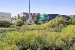 Schilf im ehem. Maackenwerder Hafen - Containerlager vom Terminal Burchardkai in Hamburg Waltershof.