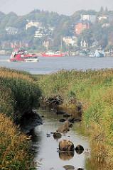 Blick über die Wasserrinne und das Schilf des ehem. Maackenwerder Hafens in Hamburg Waltershof - im Hintergrund die Elbe und den Museumshafen Oevelgönne.