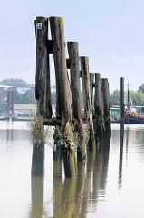 Alte Holzdalben, mit Gräsern bewachsen - Travehafen in Hamburg Steinwerder.