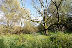 Feuchtgebiet, Teich mit hohen Bäumen - ehem. Dorf Altenwerder - Opfer der Hamburger Hafenerweiterung.
