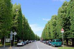 Allee mit hohen Linden, in rechtecker Form geschnitten - Kuldīgas iela in Ventspils / Windau, Lettland.