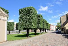 Rechteckig gestutzte / beschnittene Bäume, Linden; Strasse mit Kopfsteinpflaster - Audēju iela in Ventspils / Windau, Lettland.