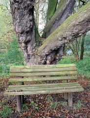 Sitzbank aus Holz, alter Kastanienbaum bei einem ehem. Wohnhaus am Süderdeich von Altenwerder - Opfer der Hamburger Hafenerweiterung.