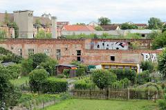 Blick auf die Ruinen der Torgauer Kuvertfabrik - historische Industriearchitektur, gegründet 1881. Im Vordergrund Schrebergärten mit Gartenlauben an der Ziegelmauer / Ruine.