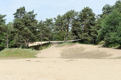 Hohe Sanddüne und Kiefern im Naturschutzgebiet Besenhorster Sandberge und Elbsandwiesen bei Geesthacht.