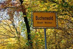 Ortsschild Buchenwald, Stadt Weimar - Bäume / Buchen in der Herbstsonne, farbiges Herbstlaub.