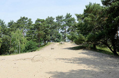 Hohe Sanddüne und Kiefern / Birken im Naturschutzgebiet Besenhorster Sandberge und Elbsandwiesen bei Geesthacht.