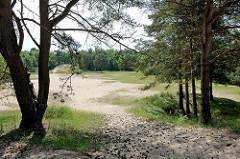 Hohe Sanddünen und Kiefern / Birken im Naturschutzgebiet Besenhorster Sandberge und Elbsandwiesen bei Geesthacht.
