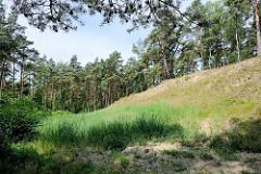 Sanddünen und Kiefern / Birken im Naturschutzgebiet Besenhorster Sandberge und Elbsandwiesen bei Geesthacht.