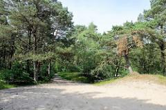 Sandweg zwischen Kiefern  im Naturschutzgebiet Besenhorster Sandberge und Elbsandwiesen bei Geesthacht.