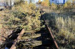 Alte stillgelegt Bahnstrecke in Hamburg Billbrook - eine junge Eiche wächst aus dem Bahnbett.