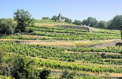 Weinberge am Spaargebirge bei Meißen. Das Gebirge hat nur eine Länge von 3 km und Breite von 200 m; auf den Hängen wird Weinbau betrieben.