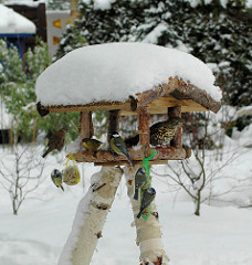 Vogelhaus im Schnee - Kohlmeisen am Meisenknödel / Fettfutter; Drossel und Finken in der Futterstation.