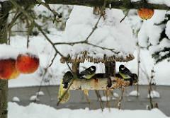 Kohlmeisen im schneebedeckten Futterhaus fressen Fettfutter - rote Äpfel hängen schneebedeckt im Baum.