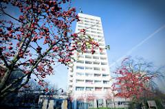 Hochhaus am Alsenplatz in Hamburg Altona-Nord; Früchte vom Zierapfel.
