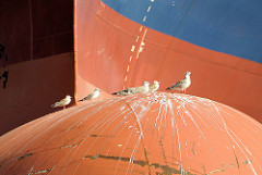 Wulstbug vom Containerriesen Christophe Colomb - Möwen sitzen in der Sonne; Burchardkai im Hamburger / Waltershofer Hafen.