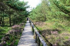 Rundwanderweg / Holzweg durch die Hochmoorlandschaft vom Pietzmoor im Naturschutzgebiet Lüneburger Heide.
