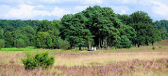 Heidelandschaft im Naturschutzgebiet Lüneburger Heide bei Schneverdingen - Wanderweg durch das Heidekraut.