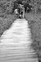 Rundwanderweg aus Bohlenstegen durch die Hochmoorlandschaft vom Pietzmoor im Naturschutzgebiet Lüneburger Heide.