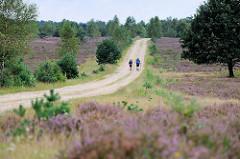 Heidelandschaft bei Bispingen während der Heideblüte - einsame Wanderer auf einem Sandweg / Feldweg.