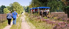 Heidelandschaft bei Schneverdingen - Feldweg mit Fussgängern, Kutschfahrten durch die blühende Heide.