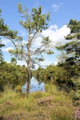 Hochmoorlandschaft im Pietzmoor - Naturschutzgebiet Lüneburger Heide bei Schneverdingen.
