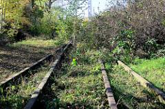 Stillgelegte Bahngleise mit jungen Birken und Wildkraut / Brombeersträuchern überwuchert - Hüttenstraße in Sangerhausen.