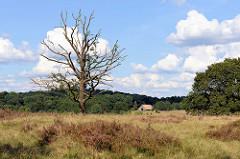 Heidelandschaft, abgestorbener Baum im Naturschutzgebiet Lüneburger Heide, Niederhaverbek.