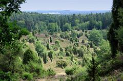 Blick auf den Totengrund in der Lüneburger Heide - ca. 30 ha großer Talkessel, Bestand mit Heidekraut und Wacholderbüschen. Neben dem Wilseder Berg zählt der Totengrund zu den bekanntesten Landschaftsstellen der Lüneburger Heide.