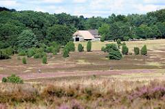 Heidelandschaft im Naturschutzgebiet Lüneburger Heide, Niederhaverbek.