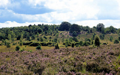 Heidelandschaft im Naturschutzgebiet Lüneburger Heide bei Schneverdingen.