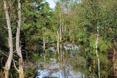 Pietzmoor im Naturschutzgebiet Lüneburger Heide bei Schneverdingen - mit Wasser gefüllter Torfstich, abgestorbene Bäume.