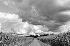 Maisfelder mit schwarz dräuenden Wolken - Landschaft bei Bispingen.