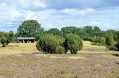 Heidelandschaft mit Wacholder und blühendem Heidekraut in der Lüneburger Heide bei Wilsede.