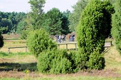 Heidelandschaft im Naturschutzgebiet Lüneburger Heide bei Schneverdingen - Pause von Fahrradfahrern / Fahrradtour zwischen Wacholderbüschen.