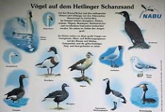 Vogeltafel der Vögel, die auf dem Hetlinger Schanzensand beobachtet werden können.